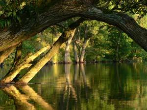 Znalezione obrazy dla zapytania rezerwat biosfery bory tucholskie- obrazy